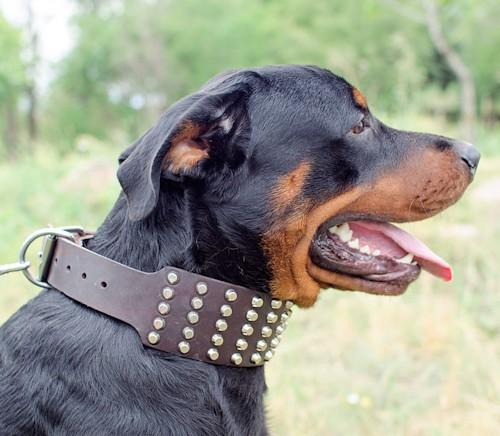large collier pour chien cadeau parfait c94. Black Bedroom Furniture Sets. Home Design Ideas