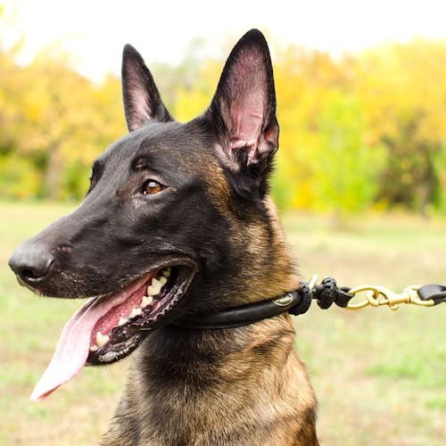 Collier etrangleur pour chien pas cher sancta simplicitas - Site pour chien pas cher ...