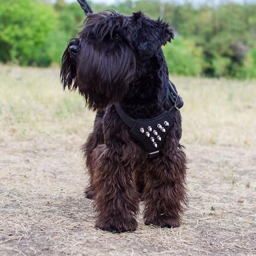 harnais pour petit chien en cuir pas cher majest h23. Black Bedroom Furniture Sets. Home Design Ideas