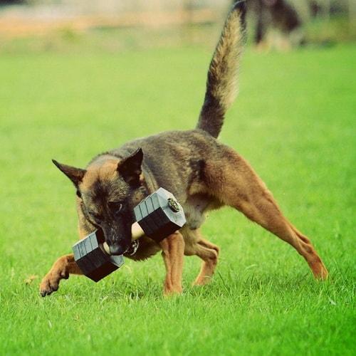 Apportable de dressage chien «Tenir ferme» en bois - WD14