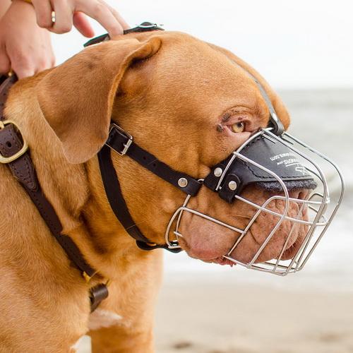 Museli re obligatoire aux chiens de toute race - Tout a l egout obligatoire ...