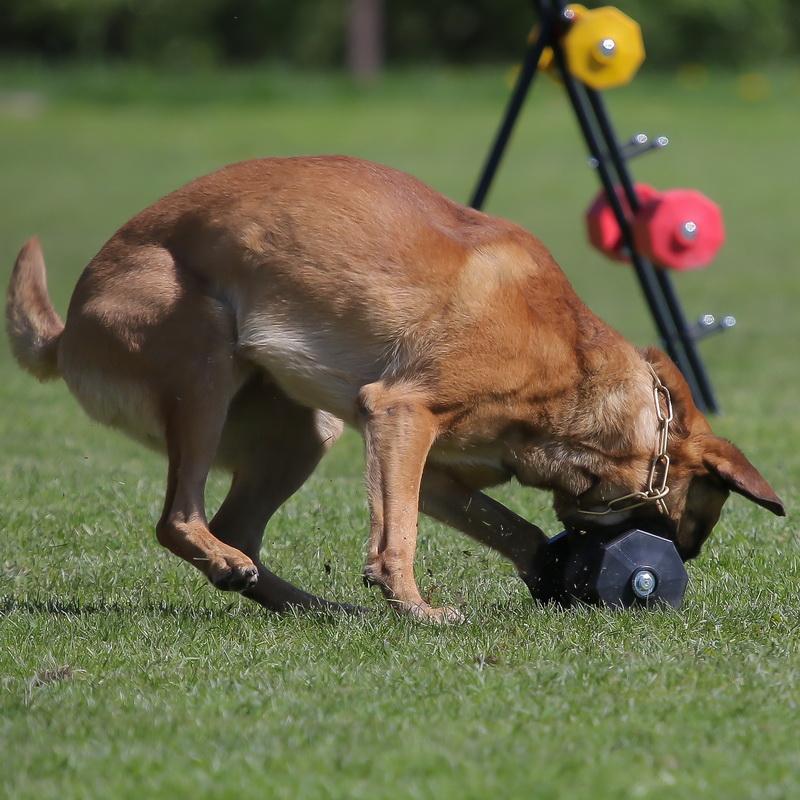 Matériel apportable pour chien malinois «Rapporter» - WD12