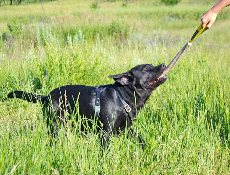 Boudin «Dressage au mordant» pour chien labrador - TE23