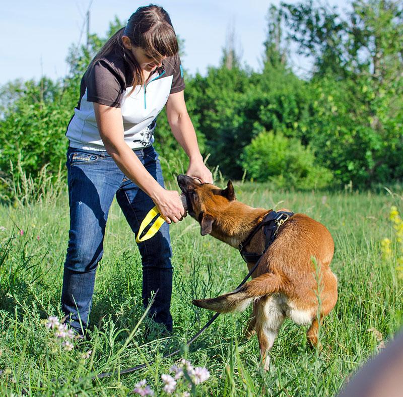 Boudin pour dressage de chien malinois «Cours d'agility