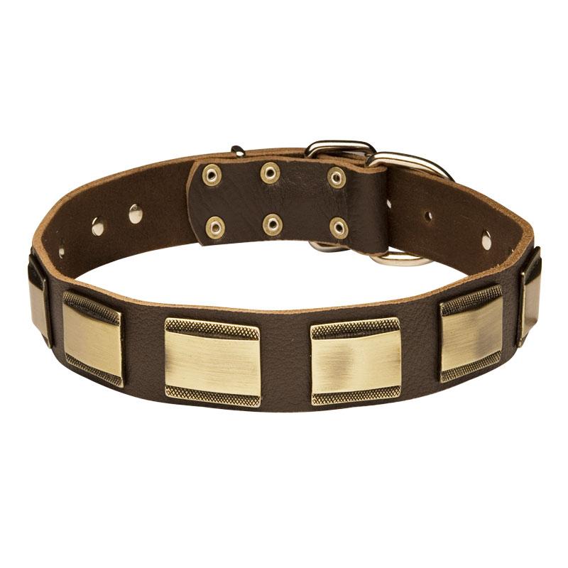 collier nouveau style pour bull terrier chien de chasse c88. Black Bedroom Furniture Sets. Home Design Ideas