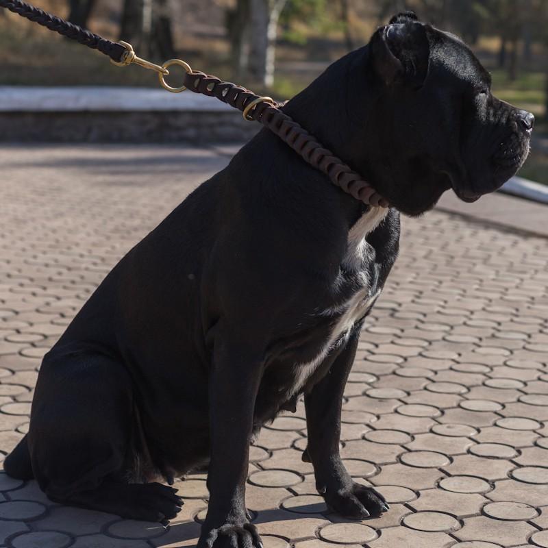 Collier de dressage chien méchant Cane Corso «Tresse