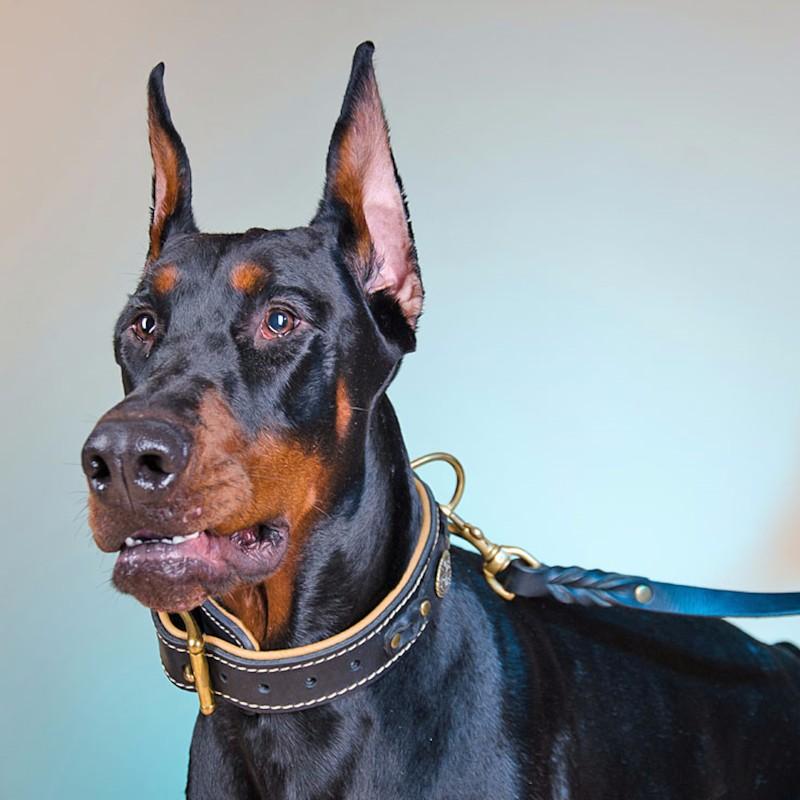 collier cuir pour doberman chien de garde couvert de lauriers c43. Black Bedroom Furniture Sets. Home Design Ideas