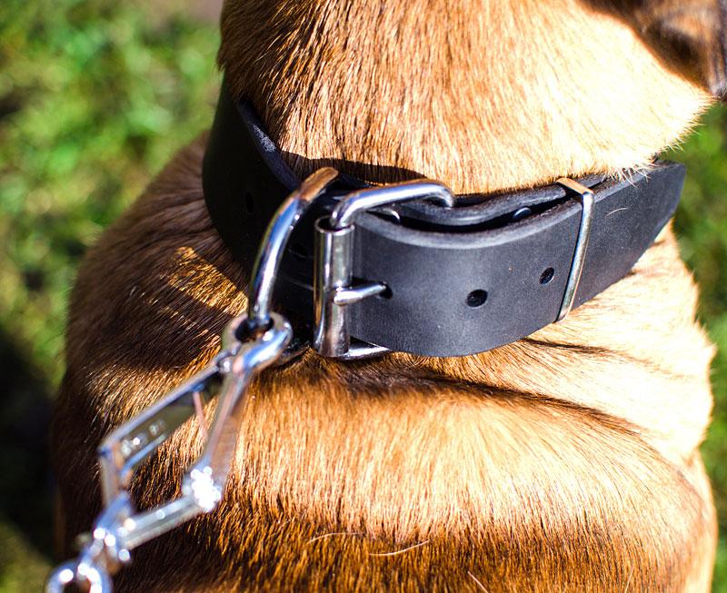 collier de dressage chien italien cane corso utilisation ais e c4. Black Bedroom Furniture Sets. Home Design Ideas