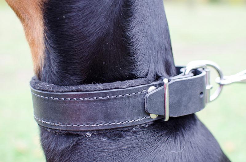 Collier de dressage pour chien Dobermann «Pas de