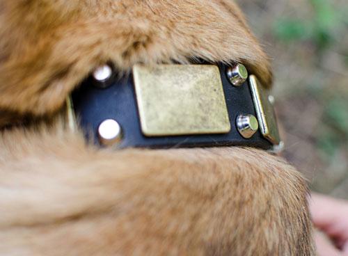 Collier original pour chien le cane corso belle prestance - Collier pour chien original ...