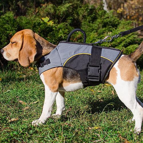Harnais pour chien beagle handicap soutien des faibles h13 - Fabriquer un harnais pour chien ...