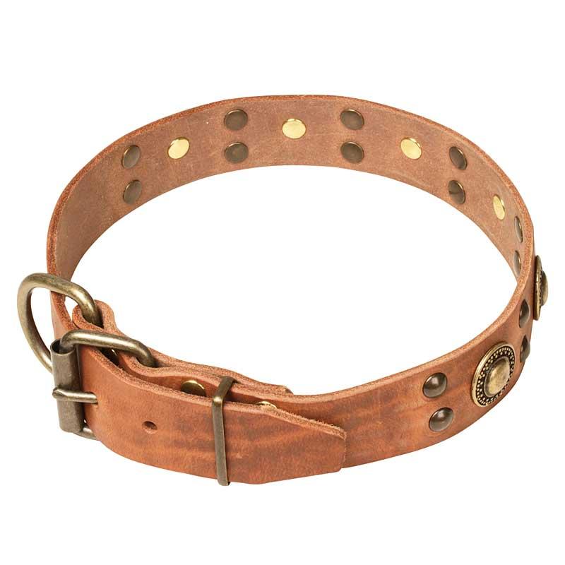 collier chien original en cuir chevalier d 39 or c10. Black Bedroom Furniture Sets. Home Design Ideas