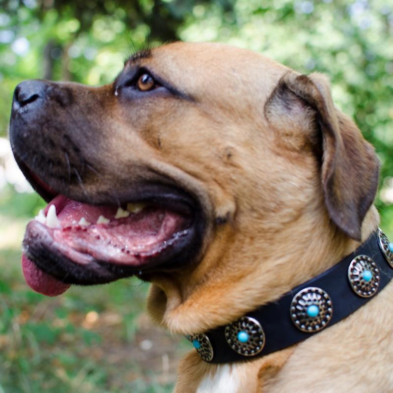 collier pour chien de garde cane corso nuit toil e c75. Black Bedroom Furniture Sets. Home Design Ideas