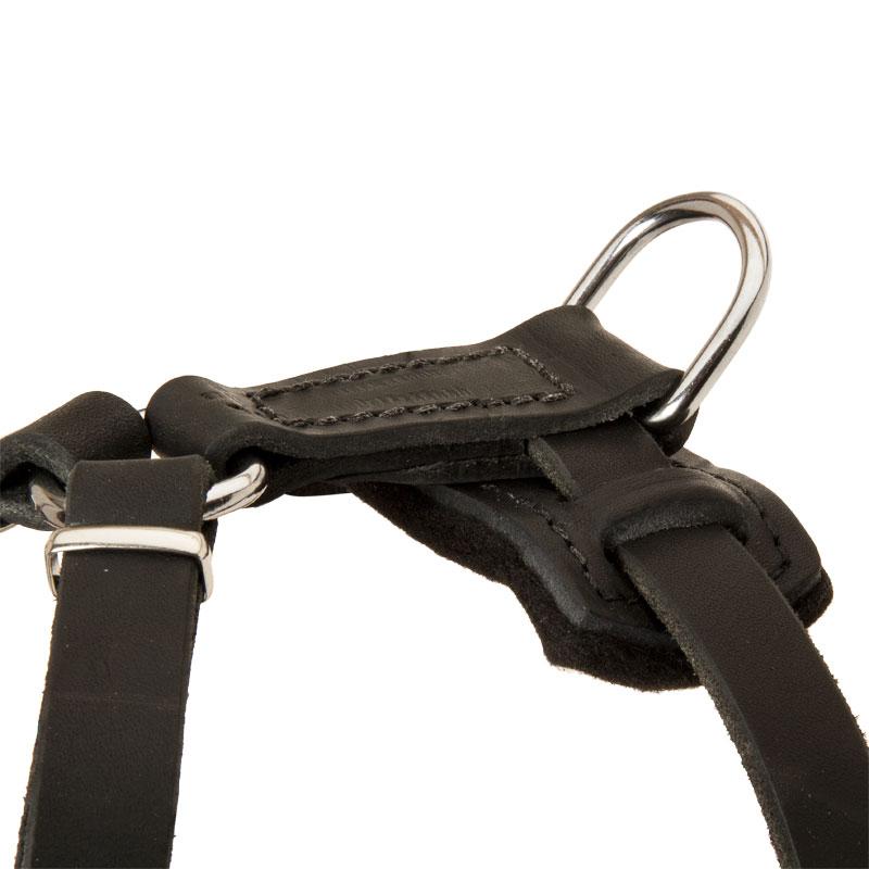 Harnais pour petit chien en cuir pas cher majest h23 - Site pour chien pas cher ...